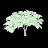 Verte Capital LLC logo